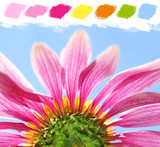 Under a coneflower color palette