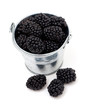 blackberries in a bucket isolated on white background