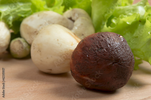 fresh boletus and lettuce