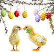 cute chickens and easter eggs