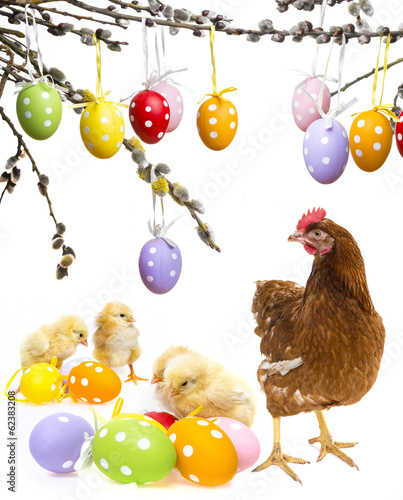 easter eggs and chickens with hen