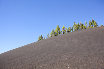 pine trees on a volcanic landscape in Tenerife