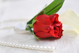 Red rose boutonniere for the groom