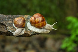 two snails in a forest