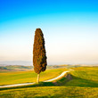 Tuscany, lonely cypress tree and rural road. Siena, Orcia Valley