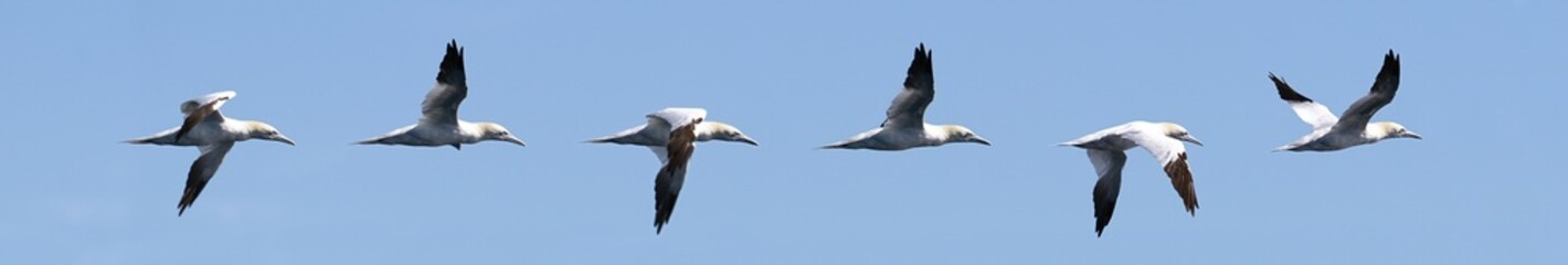 Seagull mouvement secuence