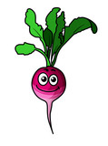 Cute fresh leafy beetroot vegetable