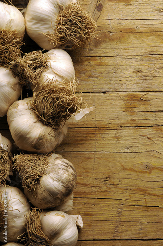 Allium sativum Garlic Aglio Knoblauch Ajo ثوم