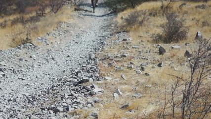 Mountain Biking Desert Perspective