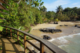 Wooden footbridge over a tropical beach