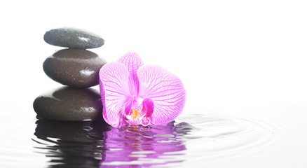 Flower and stones in water