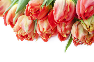 Bunch of beautiful bright tulips on white background