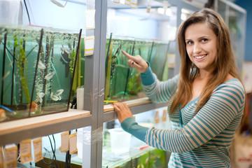 Woman chooses  fish in  tank