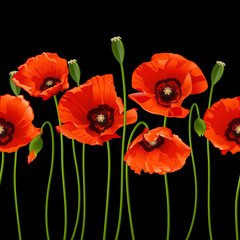 Red poppies in a row.