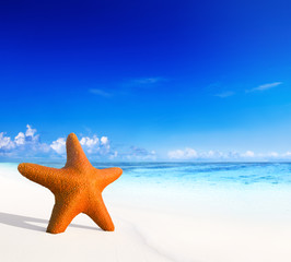 Starfish on Beautiful Tropical Beach