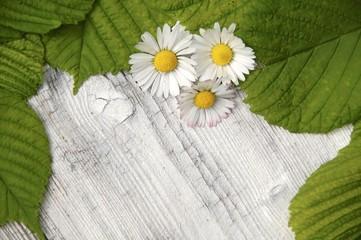Gänseblümchen auf Holzuntergrund