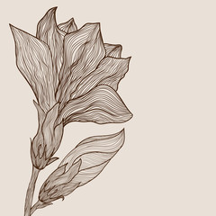 Vector hand drawn flower in vintage style