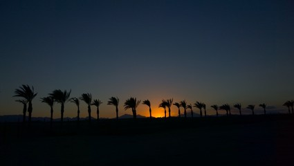 Palm trees over sunset horizon