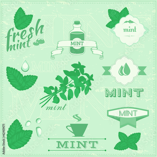isolated herbs, mint vector leaves illustration, peppermint