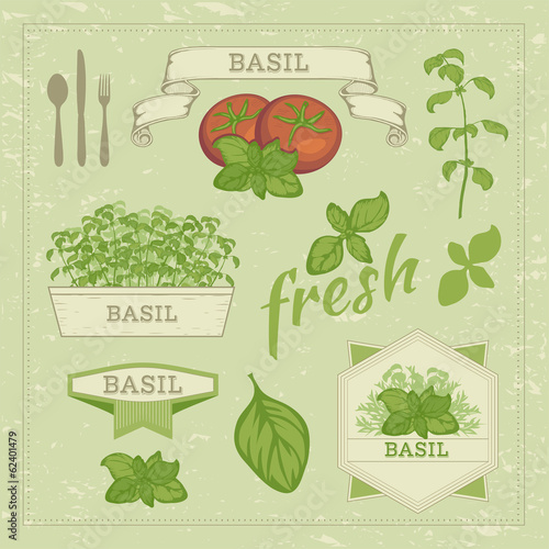vector isolated herbs, basil leaves and tomato , food