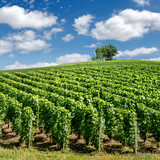 Vineyard landscape, Montagne de Reims, France
