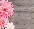 dahlia on wooden background - 62405003