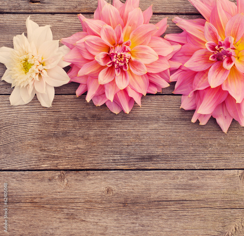 Tuinposter Hout dahlia on wooden background