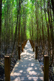 The forest mangrove in Thailand.