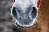 Horse snout detail portrait on the white snow poster