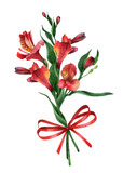 Bouquet of alstroemerias with ribbon on white background. Vector