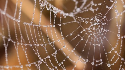 Beautiful spider's web with drops at the morning