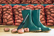 Rubber boots and potato sacks