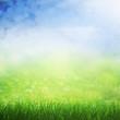 Spring sunny field