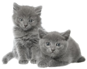 Two small gray kitten sitting