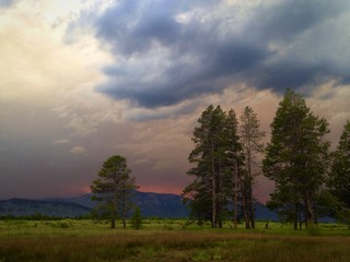 Dark smoke filled sky during forest fire.