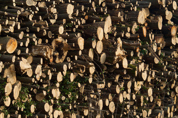 Woodpile illuminated by the afternoon sun