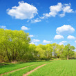 Spring landscape with blue sky