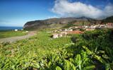 Naklejka Banana plantation at Tazacorte, La Palma, Canary Islands