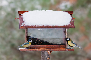 Blue tit and great tit at a feeder in winter