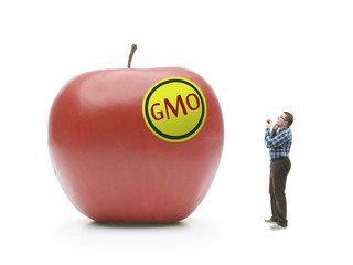 Giant GMO apple