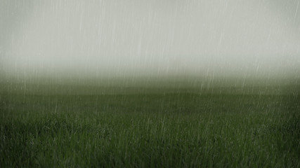 Rainy low visibility grassy fields landscape