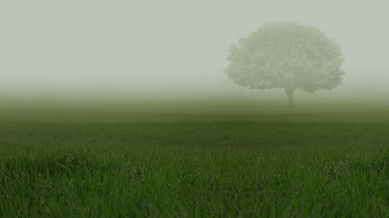 Green fields in heavy mist with a lonely tree