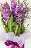 bouquet of blooming hyacinths