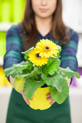 Woman Holding Potted Flowers .