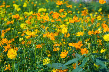 Beautiful yellow and orange flowers
