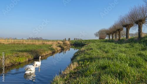 Deurstickers Zwaan Swans swimming along pollard willows