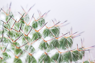 Macro of cactus