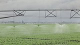 Agriculture, irrigation system for water supply in pea  field