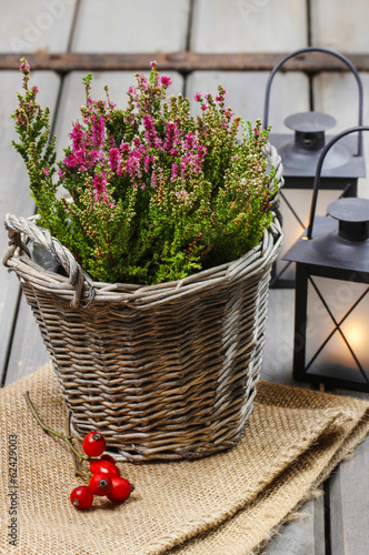 Red heather in wicker basket and lanterns