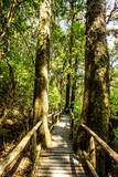 path in woods, doi inthanon national park, chiangmai Thailand